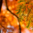 Fir branches — Stock Photo #11497328