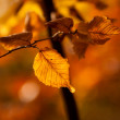 Stock Photo: Dry autumn leaves in the sunlight sunset