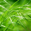 Abstract green grass — 图库照片