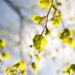 Branch with green leaves in sunlight - Photo
