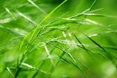 Abstract green grass — Stock Photo