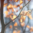Dry leaves illuminated by the sun - Photo