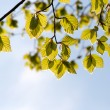 Fresh green leaves against the sky — Stock Photo #11534154