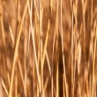 Stock Photo: Reed stems in sunlight