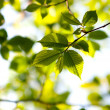 Spring leaves — Stock Photo #11535266