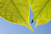 Close up of Green Leaves — Stock Photo
