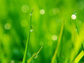 Dewdrops on green grass — Stock Photo