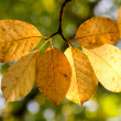 Stock Photo: Autumn wilted leaves