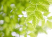 Skogen gren — Stockfoto