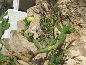 Цветущий кактус перед рок — Стоковое фото