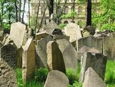 Tombstones at historic jewish cemetery of Prague — Stock Photo