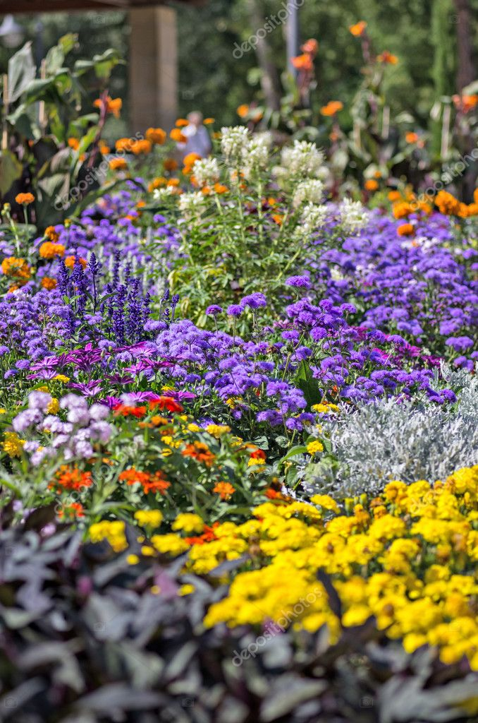 A colorful flowerbed in a park — Stock Photo #11831116