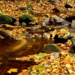 Yellowing leaves trickling stream — Stock Photo #10758084
