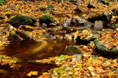 Yellowing leaves trickling stream — Stock Photo
