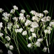 White flowers - Stock Photo