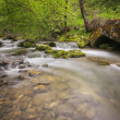 Stockfoto: River in forest