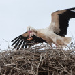 Stork in the nest with a leaf in its beak — Stock Photo
