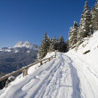 Stock Photo: Trail on slopes of SVito di Cadore