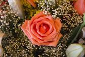 Rose - Flower — Stock Photo