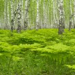 Stock Photo: Woodland scenery