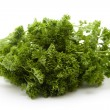 Stock Photo: Parsley freshly