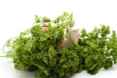 Parsley freshly with escargot — Stock Photo