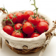 Shrub tomatoes in the basket — Stock Photo
