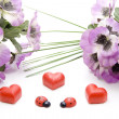 Dear heart with ladybug — Stock Photo