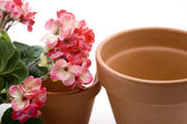 Geraniums with flowerpot — Stock Photo