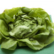 Stock Photo: Lettuce freshly