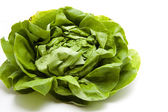 Fresh leafy vegetables — Stock Photo
