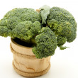Broccoli in the tub — Stock Photo