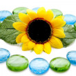 Royalty-Free Stock Photo: Blue and green glass stones with sunflower