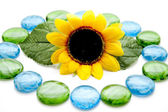 Blue and green glass stones with sunflower — Stock Photo