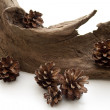 Pine cones and tree root — Stock Photo