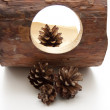 Pine cones and branch - Stock Photo