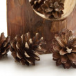 Pine cones — Stock Photo #11307026