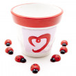 Ladybirds around  Porcelain pot — Stock Photo