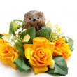 Yellow flower with Hedgehog - Stock Photo
