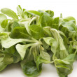 Field Salad — Stock Photo #12094841