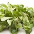 Field Salad — Stock Photo