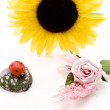 Sunflower with Ladybird — Stockfoto