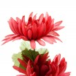 Red flower — Stock Photo