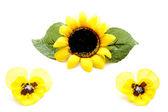 Girassol com flores amarelas — Foto Stock