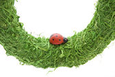 Green wreath with Ladybird — Stock Photo