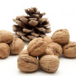Walnuts  with conifer cone - Foto de Stock
