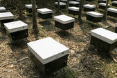Bee farmers put beehives in field. — Stock Photo