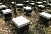 Biene Bauern platzieren Bienenstöcke in Feld. — Stockfoto