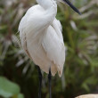 Egret — Stock Photo #11118223