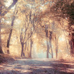 Golden autumn, landscape — Stock Photo